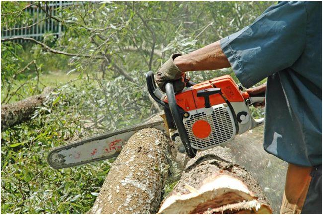 распил дерева